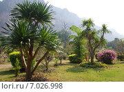 Купить «Тропический сад на территории отеля в провинции Утхайтхани, Таиланд», фото № 7026998, снято 22 января 2015 г. (c) Natalya Sidorova / Фотобанк Лори