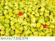 Купить «Фон из зеленых и красных плодов сладкого перца», фото № 7032574, снято 12 февраля 2013 г. (c) Сергей Дубров / Фотобанк Лори