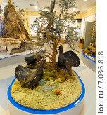 Купить «Чучела птиц в Музее города Лангепаса», фото № 7036818, снято 20 февраля 2015 г. (c) Алексей Маринченко / Фотобанк Лори