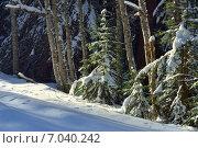 Купить «Зимний лес на Кавказе», фото № 7040242, снято 19 февраля 2015 г. (c) александр жарников / Фотобанк Лори