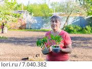 Купить «Пенсионерка с рассадой на дачном участке», фото № 7040382, снято 9 мая 2014 г. (c) Марина Славина / Фотобанк Лори
