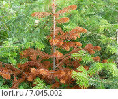 Лес хвойный. Стоковое фото, фотограф Илья Воловиков / Фотобанк Лори