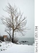 Дерево на берегу зимнего Балтийского моря. Стоковое фото, фотограф Ивашков Александр / Фотобанк Лори