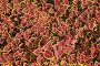 Цветочно-растительный фон, эксклюзивное фото № 7065574, снято 6 октября 2013 г. (c) Юрий Морозов / Фотобанк Лори