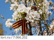 Георгиевская ленточка на цветах яблони. Стоковое фото, фотограф Ольга Литвинцева / Фотобанк Лори