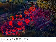 Купить «Терпуг под слоем морской воды», фото № 7071302, снято 1 августа 2013 г. (c) Дмитрий УТКИН / Фотобанк Лори