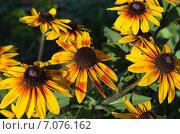 Солнечные цветы. Стоковое фото, фотограф Дурново Светлана / Фотобанк Лори