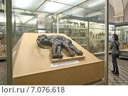 Купить «Магаданский мамонтёнок. Зоологический музей. Санкт-Петербург», эксклюзивное фото № 7076618, снято 26 февраля 2015 г. (c) Румянцева Наталия / Фотобанк Лори