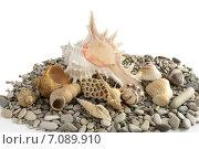 Купить «Морские ракушки и камни», фото № 7089910, снято 6 марта 2015 г. (c) Алексей Маринченко / Фотобанк Лори