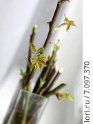 Купить «Ростки розы», фото № 7097370, снято 2 марта 2013 г. (c) DementevaJulia / Фотобанк Лори
