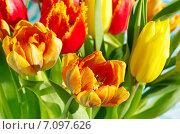 Купить «Букет тюльпанов», эксклюзивное фото № 7097626, снято 8 марта 2015 г. (c) Елена Коромыслова / Фотобанк Лори
