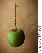 Купить «Зеленое яблоко», фото № 7101950, снято 17 июня 2019 г. (c) Елена Корнеева / Фотобанк Лори
