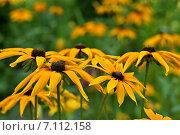Желтые цветы. Стоковое фото, фотограф Мариана Бэлэнеску / Фотобанк Лори