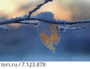 Купить «Лист в инее», фото № 7123878, снято 8 марта 2015 г. (c) александр жарников / Фотобанк Лори