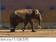 Слон. Стоковое фото, фотограф Елена Рыбкина / Фотобанк Лори