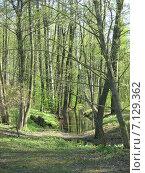 Зеленый шум, весенний лес. Стоковое фото, фотограф Алексей Апполонов / Фотобанк Лори