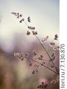 Дикая трава на размытом фоне природы. Стоковое фото, фотограф Светлана Витковская / Фотобанк Лори