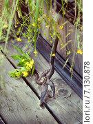 Старый ржавый садовый секатор на деревянных ступенях. Стоковое фото, фотограф Светлана Витковская / Фотобанк Лори