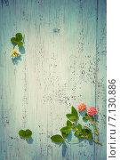 Цветы клевера на деревянной поверхности. Стоковое фото, фотограф Светлана Витковская / Фотобанк Лори