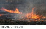 Купить «Горящая трава», видеоролик № 7136946, снято 17 марта 2015 г. (c) Smolin Ruslan / Фотобанк Лори