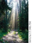 Лучи солнца в сосновом лесу. Стоковое фото, фотограф Мячикова Наталья / Фотобанк Лори