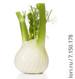 Купить «Fresh fennel bulb isolated on white background close up», фото № 7150178, снято 9 февраля 2015 г. (c) Natalja Stotika / Фотобанк Лори