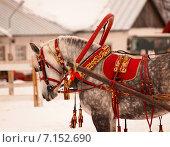 Лошадь в парадной зимней упряжи перед соревнованиями на размытом фоне. Стоковое фото, фотограф Елена Зенкович / Фотобанк Лори
