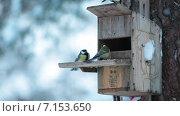 Купить «Кормушка для птиц», видеоролик № 7153650, снято 31 января 2015 г. (c) Кекяляйнен Андрей / Фотобанк Лори