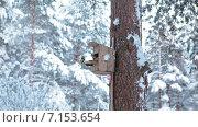 Купить «Кормушка для птиц в зимнем лесу на сосне», видеоролик № 7153654, снято 31 января 2015 г. (c) Кекяляйнен Андрей / Фотобанк Лори