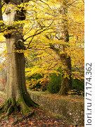 Купить «Осенний парк», фото № 7174362, снято 18 ноября 2014 г. (c) Татьяна Кахилл / Фотобанк Лори