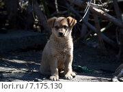 Взгляд брошенного щенка на улице. Стоковое фото, фотограф Илья Митрошин / Фотобанк Лори