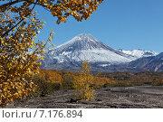 Осенний вид на действующий вулкан Авачинский на Камчатке. Стоковое фото, фотограф А. А. Пирагис / Фотобанк Лори