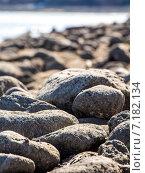 Крупные серые камни на берегу, фон. Стоковое фото, фотограф Илья Алексеев / Фотобанк Лори