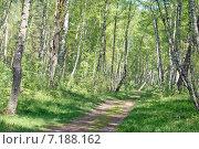 Купить «Смешанный лес на Куршской косе», эксклюзивное фото № 7188162, снято 17 мая 2008 г. (c) Svet / Фотобанк Лори