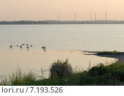 Утро за городом. Птицы на воде. Стоковое фото, фотограф Svet / Фотобанк Лори