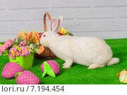 Белый пасхальный кролик с цветами в корзинах. Стоковое фото, фотограф Евгения Устиновская / Фотобанк Лори