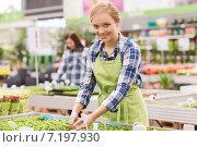 Купить «happy woman taking care of seedling in greenhouse», фото № 7197930, снято 25 февраля 2015 г. (c) Syda Productions / Фотобанк Лори