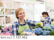happy woman taking care of flowers in greenhouse. Стоковое фото, фотограф Syda Productions / Фотобанк Лори