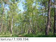 Купить «Дорога через смешанный русский лес», эксклюзивное фото № 7199194, снято 3 июня 2020 г. (c) Svet / Фотобанк Лори