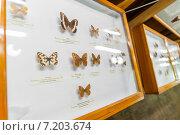 Витрины с бабочками в музее Набокова. Санкт-Петербург (2013 год). Редакционное фото, фотограф Ольга Визави / Фотобанк Лори