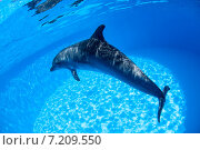 Купить «Дельфин плавает под водой», фото № 7209550, снято 25 июня 2012 г. (c) Andriy Bezuglov / Фотобанк Лори