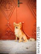 Купить «Бездомная собака», фото № 7215026, снято 21 августа 2014 г. (c) Ксения Крылова / Фотобанк Лори