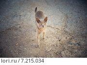 Купить «Бездомная кошка», фото № 7215034, снято 28 августа 2014 г. (c) Ксения Крылова / Фотобанк Лори
