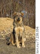 Купить «Симпатичная собака на улице», эксклюзивное фото № 7238094, снято 28 марта 2015 г. (c) Елена Коромыслова / Фотобанк Лори