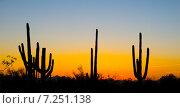 Купить «Пейзаж на закате в национальном парке Сагуаро, Аризона, США», фото № 7251138, снято 1 апреля 2015 г. (c) Ирина Кожемякина / Фотобанк Лори
