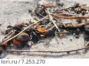 Купить «Янтарь на берегу Балтики», эксклюзивное фото № 7253270, снято 11 апреля 2015 г. (c) Шуньята Антонова / Фотобанк Лори