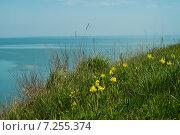Купить «Над морем на пригорке цветут дикие ирисы», фото № 7255374, снято 12 апреля 2015 г. (c) Королевский Василий Федорович / Фотобанк Лори