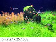 Купить «Флора и фауна аквариума», фото № 7257538, снято 14 марта 2015 г. (c) Татьяна Белова / Фотобанк Лори