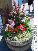 Цветы в деревянной кадке и канадский флаг (2009 год). Стоковое фото, фотограф Олеся Ефименко / Фотобанк Лори