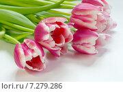 Букет розовых тюльпанов на белом фоне. Стоковое фото, фотограф Елена Коромыслова / Фотобанк Лори